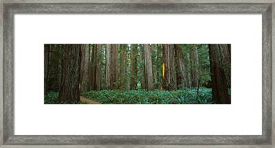 Trees In A Forest, Jedediah Smith Framed Print by Panoramic Images