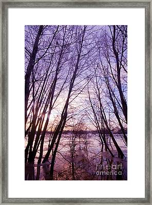 Trees In Water Framed Print by Michal Bednarek