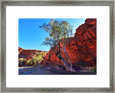 Trephina Gorge Framed Print by Bill  Robinson