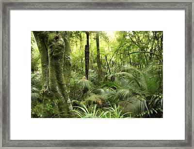 Tropical Jungle Framed Print by Les Cunliffe