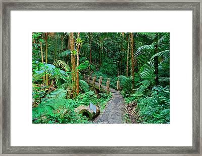 Tropical Rain Forest In San Juan Framed Print