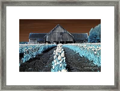 Tulip Barn Framed Print