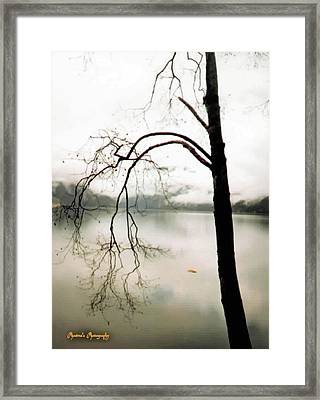 Framed Print featuring the photograph Twiggy by Sadie Reneau