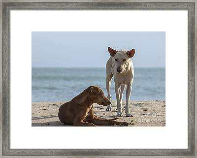 Two Homeless Dogs On The Beach Framed Print by Patricia Hofmeester