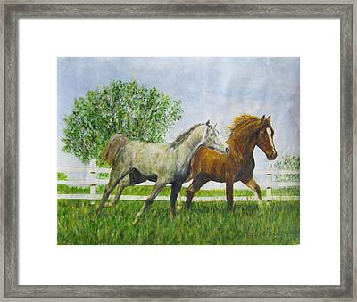 Two Horses Running By White Picket Fence Framed Print