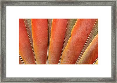 Underside Wing Coloration Framed Print by Darrell Gulin