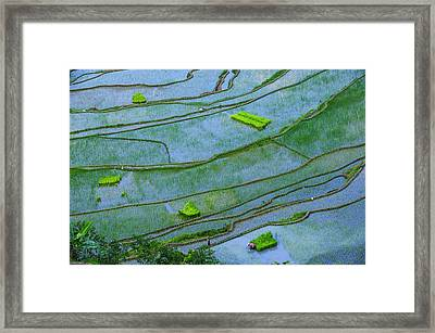 Unesco World Heritage Site, Rice Framed Print by Michael Runkel
