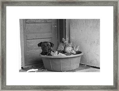 Unlikely Friends Framed Print