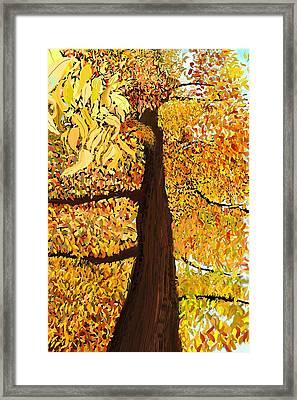 Up Tree Framed Print