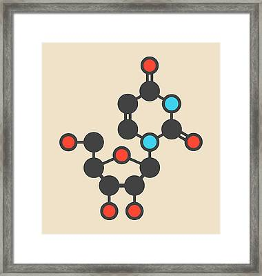 Uridine Nucleoside Molecule Framed Print