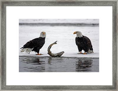Usa, Alaska, Chilkat Bald Eagle Preserve Framed Print by Jaynes Gallery