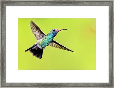 Usa, Arizona, Madera Canyon Framed Print