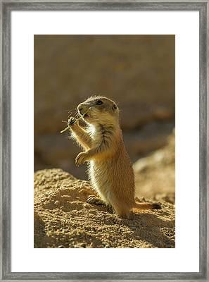 Usa, Arizona-sonora Desert Museum Framed Print