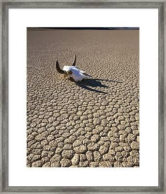 Usa, California, Death Valley, Cow Framed Print