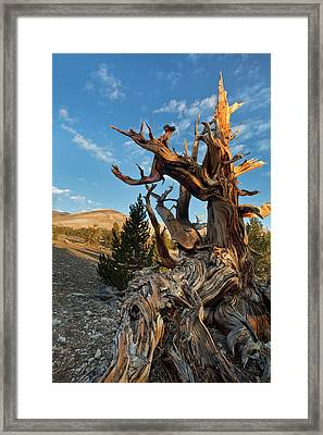 Usa, California, Inyo National Forest Framed Print