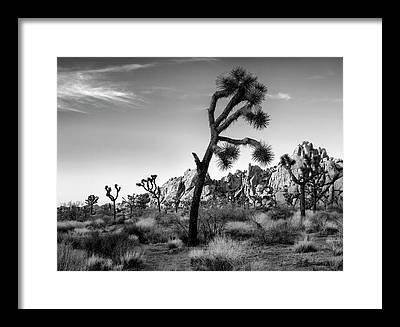 Joshua Tree National Park Framed Prints