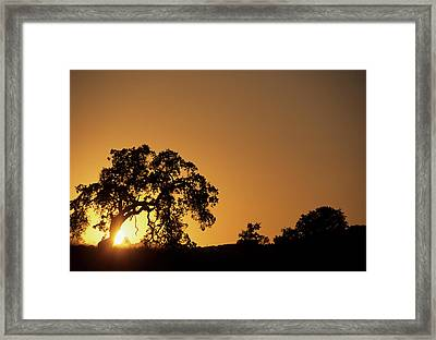 Usa, California, Oak Tree, Sunset Framed Print