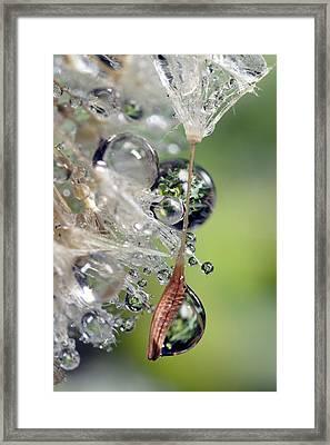 Usa, California, San Diego, Close-up Framed Print