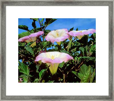 Usa, California, San Diego, Mission Framed Print by Jaynes Gallery
