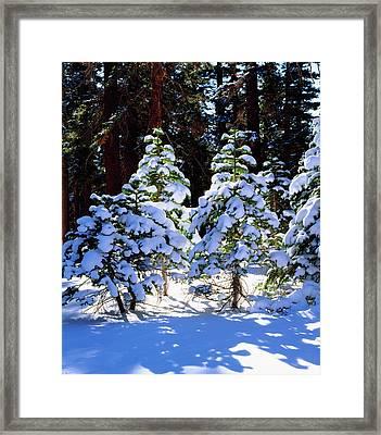 Usa, California, Snow-covered Red Fir Framed Print