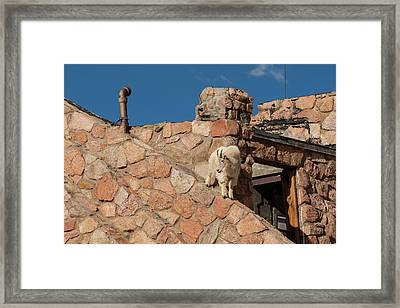 Usa, Colorado, Mt Framed Print