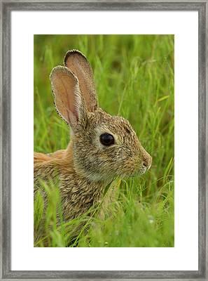 Usa, Colorado, Rocky Mountain Arsenal Framed Print by Jaynes Gallery