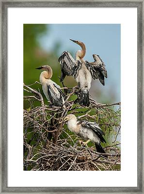 Usa, Florida, Green Cay, Wakodahatchee Framed Print by Jaynes Gallery