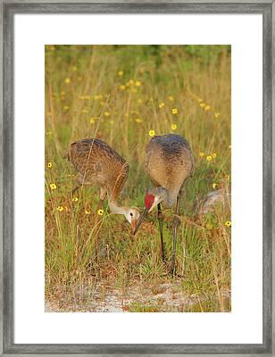 Usa, Florida, Indian Lake Estates Framed Print