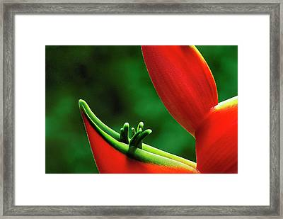 Usa, Hawaii, Hilo Framed Print