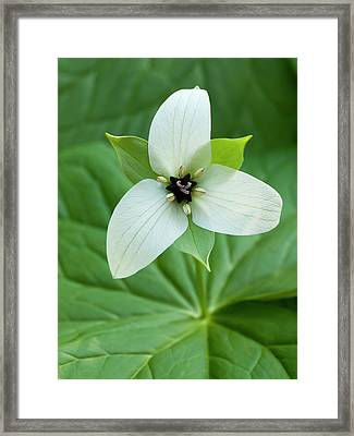 Usa, North Carolina, Blue Ridge Framed Print by Ann Collins
