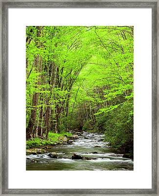 Usa, North Carolina, Great Smoky Framed Print by Ann Collins