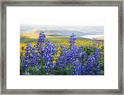 Usa, Oregon, Columbia River Gorge Framed Print
