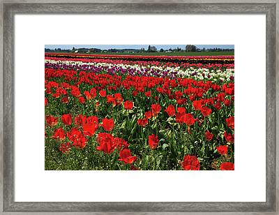 Usa, Oregon, Woodburn, Wooden Shoe Framed Print