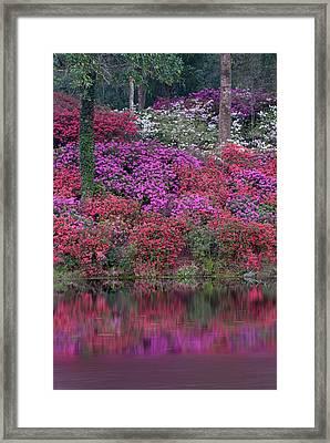 Usa, South Carolina Framed Print