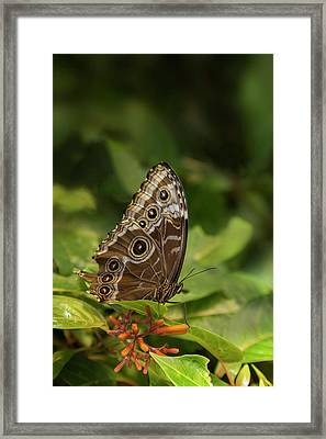 Usa, Tennessee, Chattanooga Framed Print by Jaynes Gallery