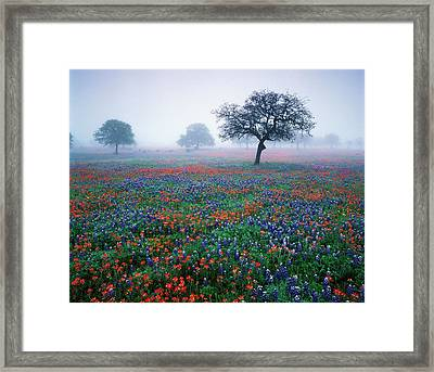 Usa, Texas, Hill Country, View Of Texas Framed Print