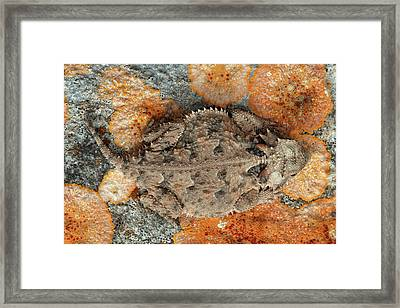 Usa, Texas, Kimble County Framed Print by Jaynes Gallery