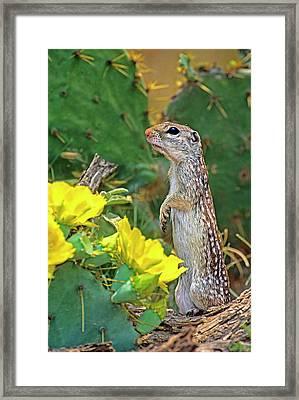 Usa, Texas, Rio Grande Valley, Mcallen Framed Print by Jaynes Gallery