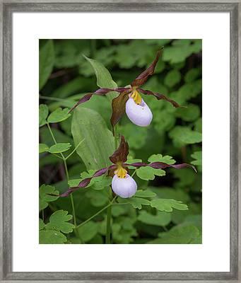 Usa, Washington State, Kamiak Butte Framed Print