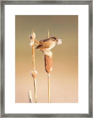 Usa, Wyoming, Sublette County, Marsh Framed Print by Elizabeth Boehm