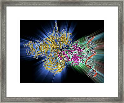 Uv-damaged Dna-binding Protein And Dna Framed Print by Laguna Design