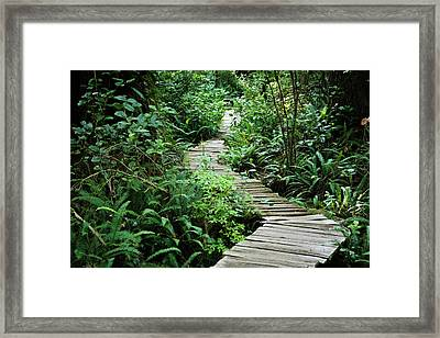Vancouver Island, Clayoquot Sound Framed Print