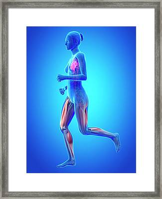 Vascular System Of Runner Framed Print