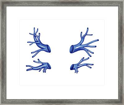 Venous System Of The Thorax Framed Print by Asklepios Medical Atlas
