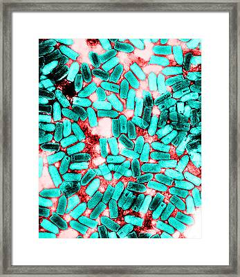 Vesicular Stomatitis Indiana Virus, Tem Framed Print by Science Source