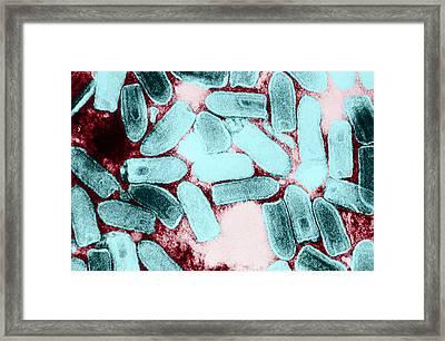 Vesicular Stomatitis Virus, Tem Framed Print by Science Source