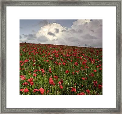 Vibrant Poppy Fields Under Moody Dramatic Sky Framed Print