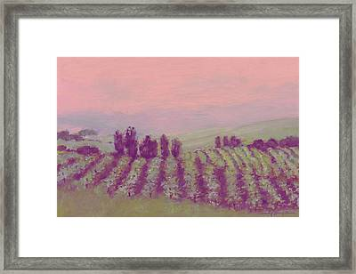 Vineyard At Dusk Framed Print