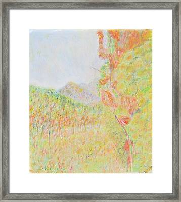 California Vineyard Framed Print