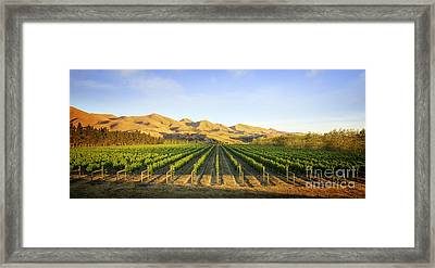 Vineyard In Canterbury New Zealand Framed Print by Colin and Linda McKie
